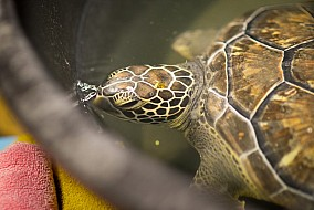 Turtle Rescue Partnership