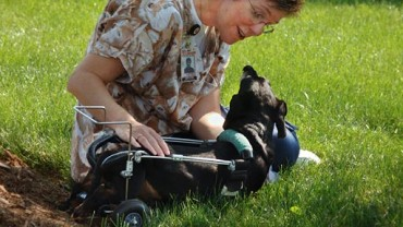 NC State woman and disabled dog