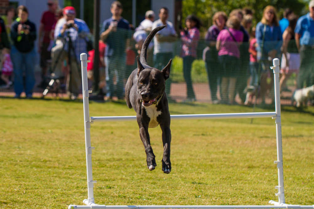 23nd Annual Dog Olympics