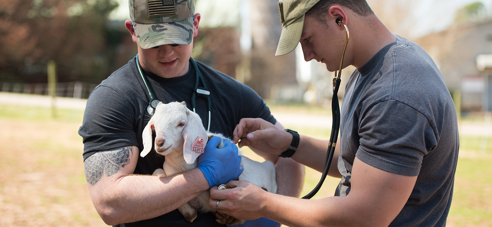 Photo by Nathan Latil/NC State Veterinary Medicine