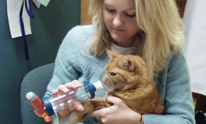 Cat getting inhaler treatment