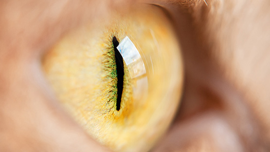 Close up of cat's eye