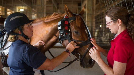 NC State CVM horse with endoscope