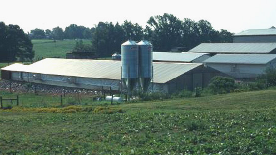 NC State CVM Poultry Barn