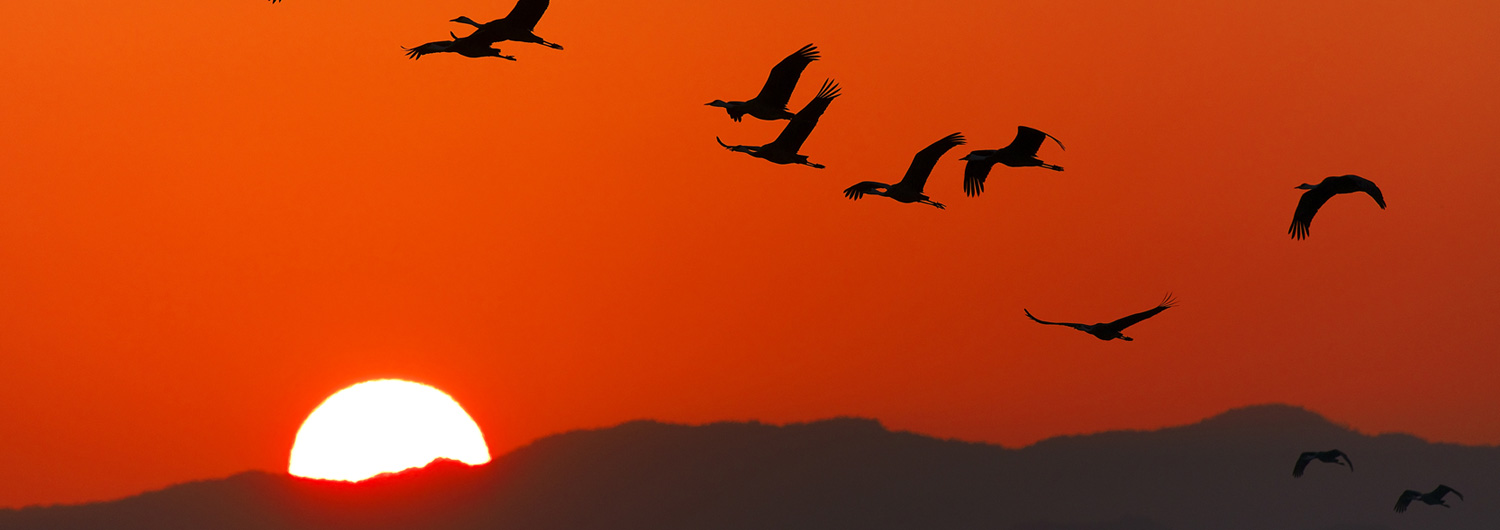 Birds soaring over mountain sunrise