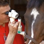 Dr. Brian Gilger does an equine eye exam.