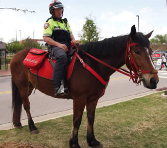 NC State Police Horse