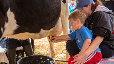 NC State CVM young boy milking cow at Open House
