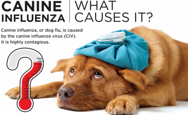 What Causes Canine Flu?