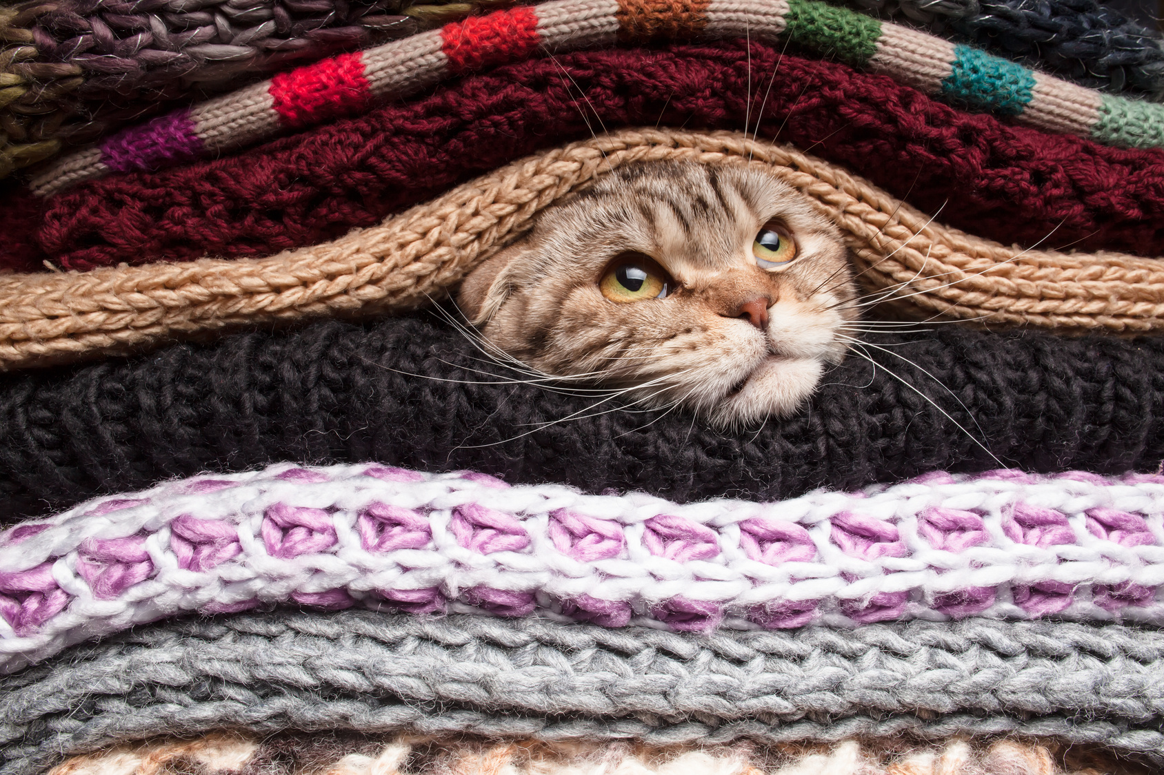 Cat in Pile of woolen clothes