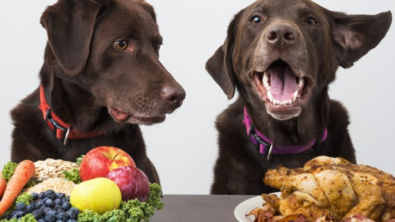 Dogs with choice of food diet