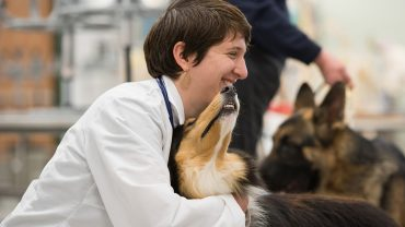 female veterinarian holds collie dog, german shepard in the background