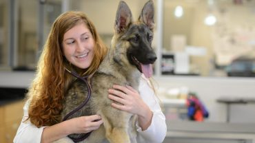 Veterinarian with german shepard in clinical setting