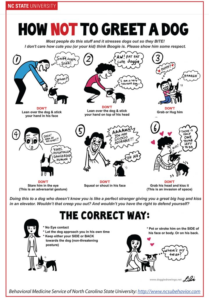 Download instructions on how to greet a dog.