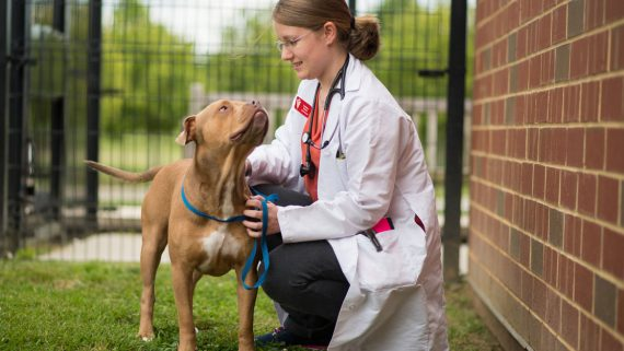 veterinarian petting dog