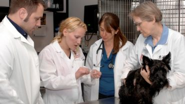 Vets Caring for dog