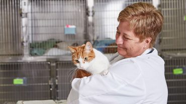 Veterinarian with cat.