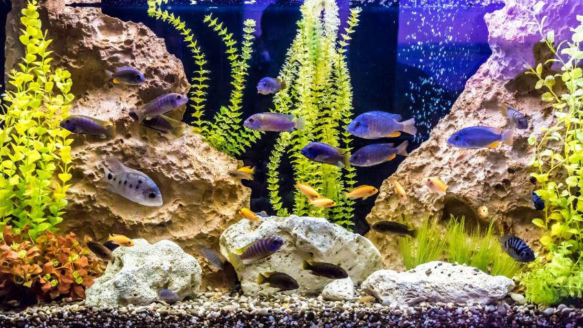 Dealing with aquariums and ponds during power outages nc for Cloudy water fish tank