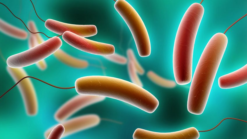 Antimicrobial resistance development in bacteria — like E. coli, (pictured above), can have devastating effects on human health.