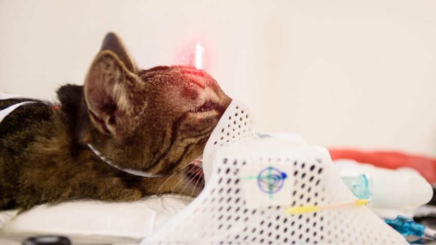 Turbo the cat receives stereotactic radiation therapy.