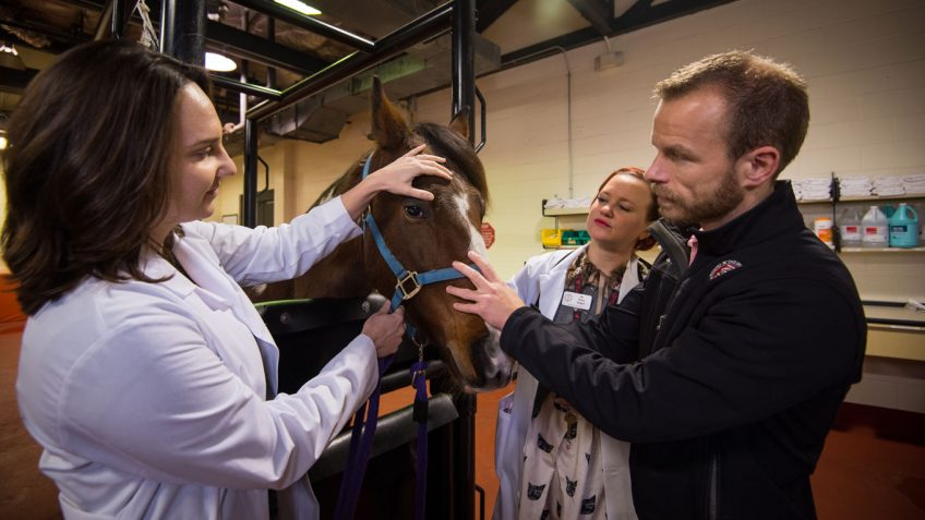 New Equine Cancer Therapy Successfully Treats Common Tumors