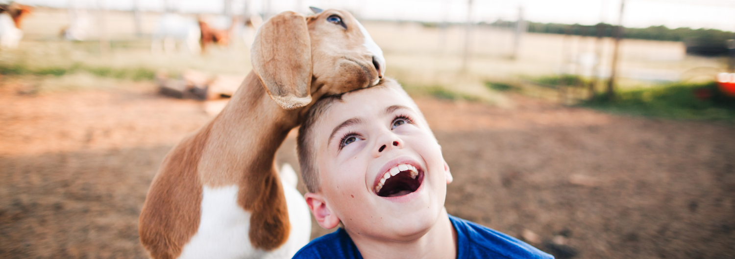 Boy with blue shirt with goat in field