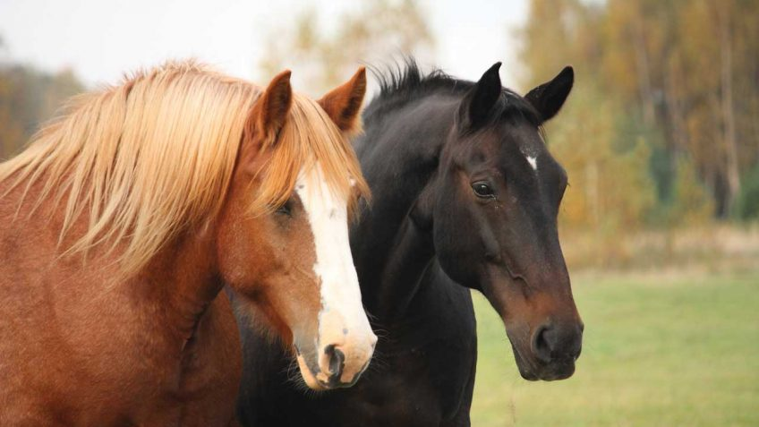 Two horses in pasture.