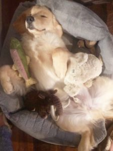 Trout sleeping with all of his favorite toys, including a baby dog and a trout. Photo submitted by Ellen Williams