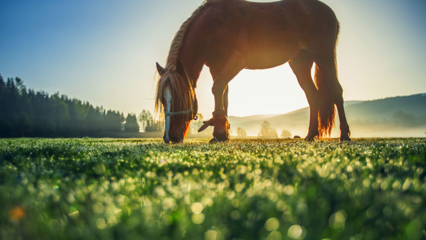 Horse grazing in a pasture at sunset
