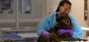 April Chappelle with canine patient