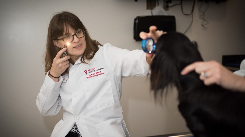The CVM's Freya Mowat is a co-author of a study looking at neurohormone differences in canine eye diseases.